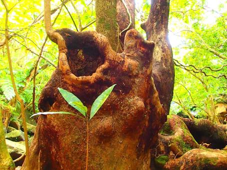 原始の森へ〜西表島アクティビティツアー
