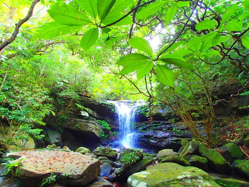 西表ツアーおすすめ家族旅行・人気のカヌーでマングローブを漕いでジャングル探検トレッキングで秘境の滝巡り、午後からトレッキングで秘境の滝を目指します。大自然のエナジーを体感しよう。石垣島から日帰り参加もOK!です。