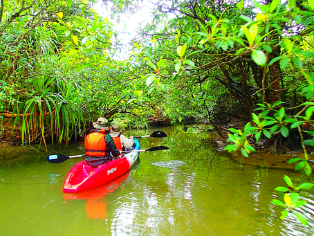 八重山旅行・西表島カヌーでジャングルクルーズ体験