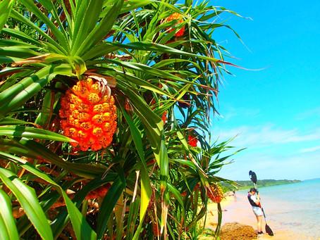 島旅で素敵な出逢い&冒険へ〜🍍西表島カヌー