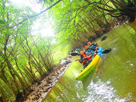 島旅でジャングル探検〜西表島