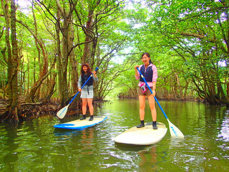 島旅おすすめ女子旅行〜西表島人気のSUP&由布島観光