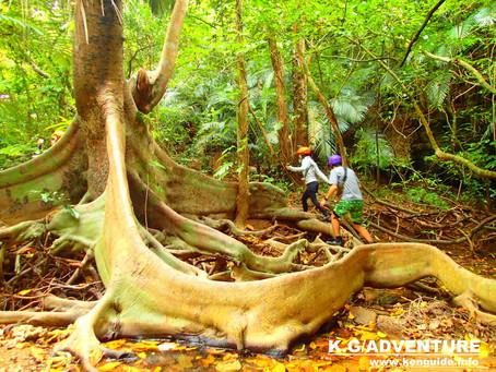 島旅で原始の森へ行ってみよう〜西表島