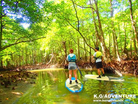 島旅でのんびり滝巡り〜西表島