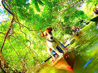 愛犬(ペット)と一緒に石垣島・西表島で遊ぼう!西表島ケンガイドがおすすめする人気のアクティビティツアー体験を、マングローブをカヌーや人気の SUP・スタンドアップパドルボードで漕いだり、ジャングルをトレッキングで秘境の滝で遊ぼう。アドベンチャーボートで行くパナリ島シュノーケルなど愛犬と一緒に西表島ツアーを楽しもう!石垣島や各離島からの日帰り参加もできます。