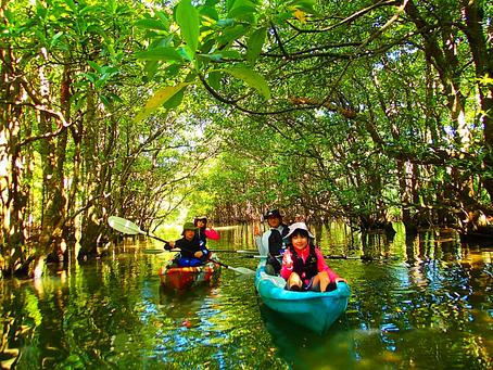子供と一緒にジャングル探検・八重山旅行・西表島