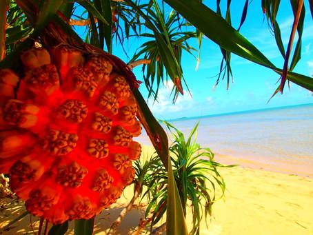 楽園で遊ぼう!西表島アクティビティツアー