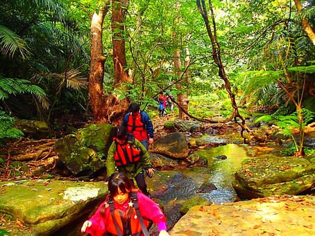 秘境の滝へ行こう!西表島トレッキングツアー体験
