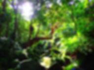 石垣島旅行・西表島で人気の島旅トレッキングツアー!パワースポット秘境ゲータの滝巡りを!西表島ケンガイドがおすすめする人気の観光アクティビティ、半日ツアーなので島内観光も出来る、人気の由布島観光や星砂の浜観光などに、石垣島・小浜島から日帰り参加もOK!