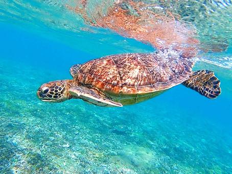 可愛い海ガメと一緒に泳いでみよう✨バラス島シュノーケリング🤿
