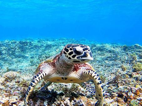 可愛い海ガメと一緒に泳ごう🐠 カヌー&バラス島シュノーケリング