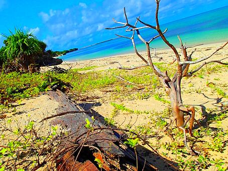 西表島で島旅を楽しもう〜🌴