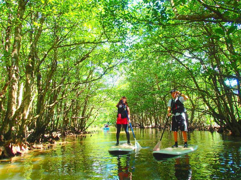 夏休み人気のアクティビティツアー体験で遊べる石垣島・西表島格安ツアーへ行こう!西表島ツアーランキング人気のケンガイドが家族旅行におすすめのアドベンチャー体験をご紹介します。SUP・スタンドアップパドルボード・カヌーでマングローブクルーズ、トレッキングでジャングル探検滝めぐり&人気の水遊びキャニオニングやアドベンチャーボートで南国パナリ島シュノーケル・星砂の浜シュノーケリングで沖縄旅行を遊びつくそう!
