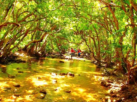 島旅で癒しの時間を過ごそう〜西表島アクティビティツアー体験