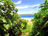 黒島(くろしま):Kuroshima Island 周囲12.6km、面積10.02平方キロメートル、人口約200人。集落以外の土地の大部分は牧場になっていて、約3,000頭の肉用子牛が飼育されています。島にはセリ市場がありセリが隔月で行われます。また海中も魅力的で周囲のリーフのタイドプールにはカラフルな熱帯魚がたくさんいます。また「西の浜」はウミガメの産卵場所となっています。◆西表島大原港から直接行く船はありません。石垣島経由となります。