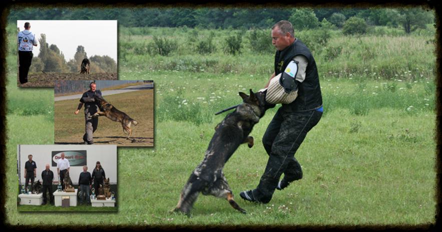 Foxfield K9, German Shepherd Breeders and Importing