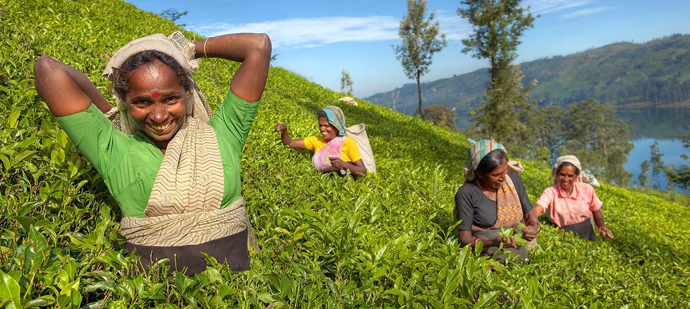 Mulher sorrindo e olhando para a câmera, com mulheres trabalhadoras ao fundo em uma plantação de chá no Sri Lanka