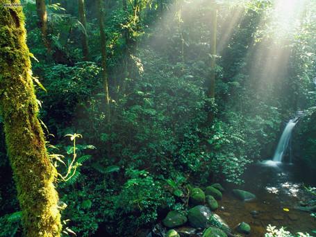 Por que Costa Rica?