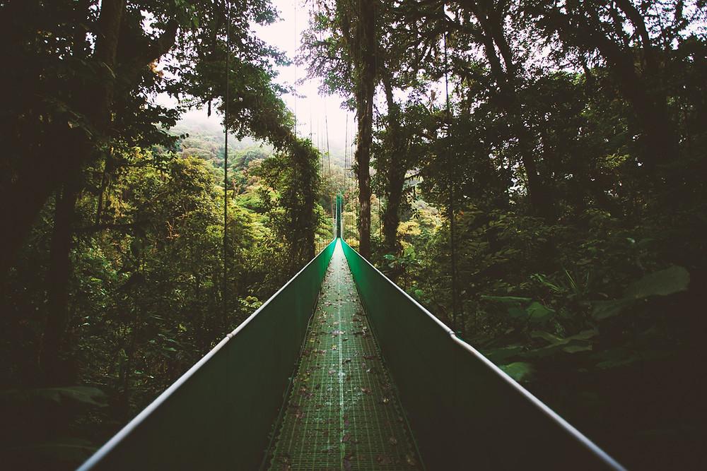 Uma ponte suspensa no meio da floresta. Costa Rica