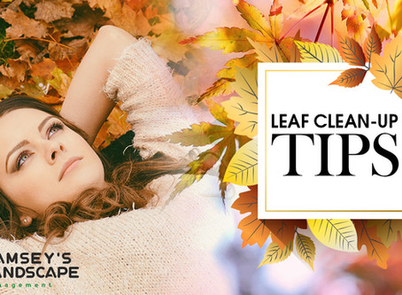 Top Tips for Fall Leaf Clean-Ups