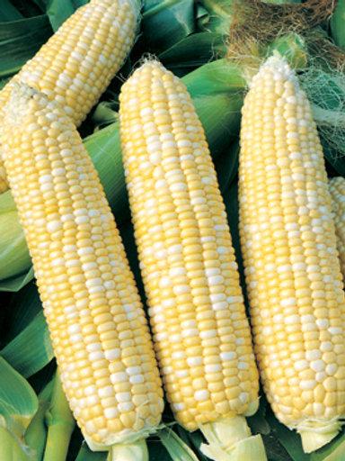 "Seeds: Corn - ""Sweet Corn"""