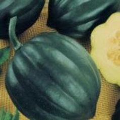 """Seeds: Squash - """"Table Queen Acorn Squash"""""""