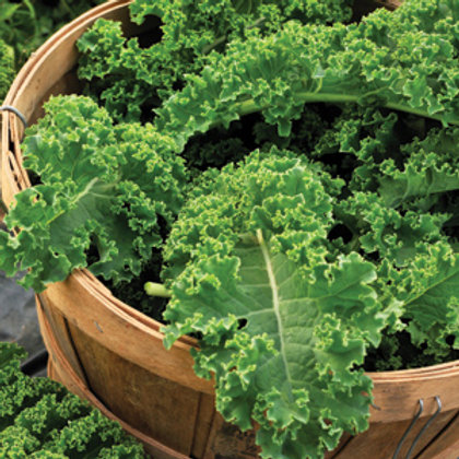 "Seeds: Kale ""Green Curled"""