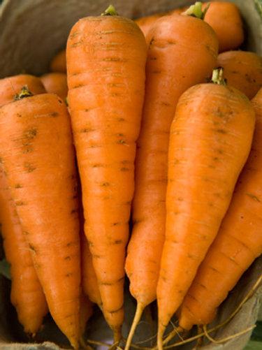 "Seeds: Carrots - ""Chantenay"""