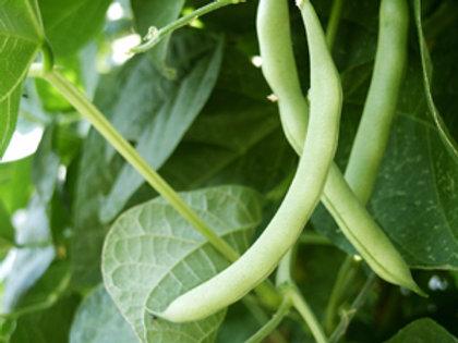 """Seeds: Beans - Pole Bean """"Kentucky Wonder Green"""""""