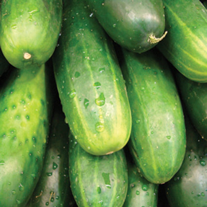 "Seeds: Cucumber - ""Marketmore"""