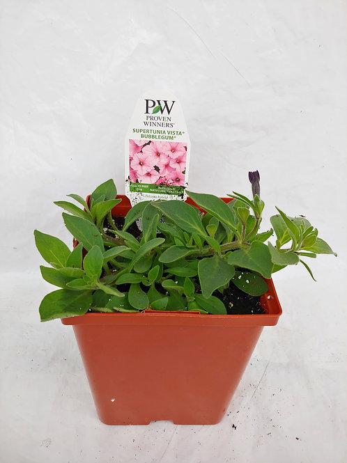 Petunia: Supertunia Vista Series
