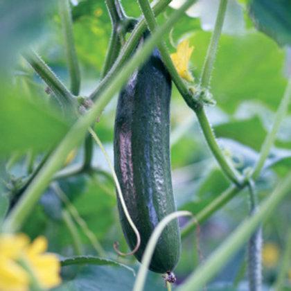 "Seeds: Cucumber - ""Straight 8"""