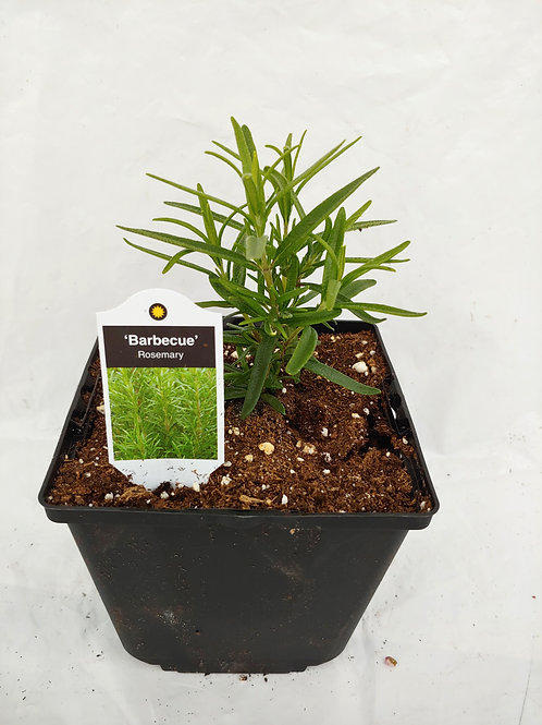 Herb - Rosemary: Barbeque