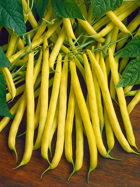"Seeds: Beans - Bush Bean ""Top Notch Golden"""