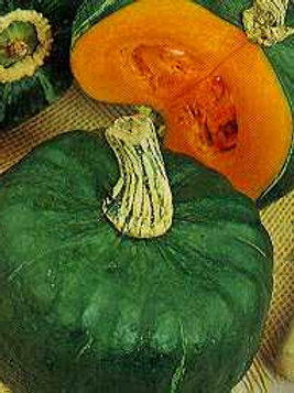 "Seeds: Squash ""Buttercup"" (Winter Squash)"