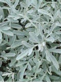 """Artemesia - """"Silver Brocade"""""""