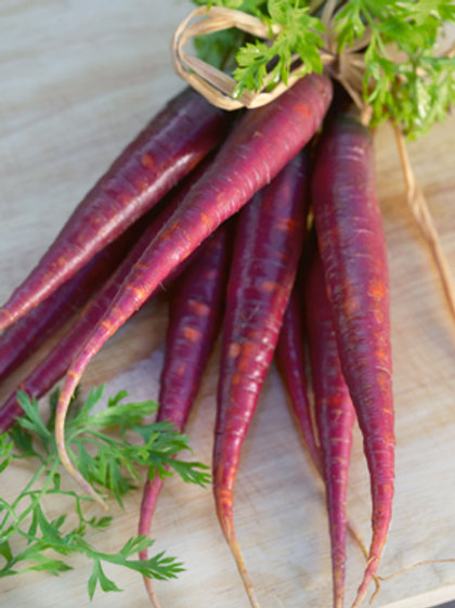 "Seeds: Carrots - ""Purple Haze"""