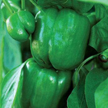 Seeds: Peppers - Green Bell Pepper