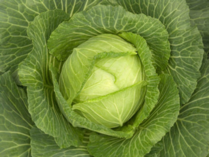 "Seeds: Cabbage ""Golden Acre"" (Early Cabbage)"