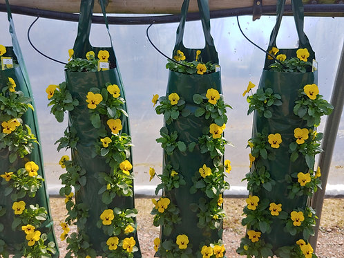 Hanging Bag - Viola Penny Yellow Blotch