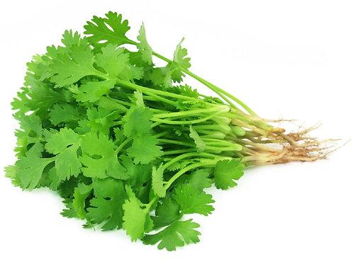 """Herb - Coriander """"Santo""""  (Cilantro)"""