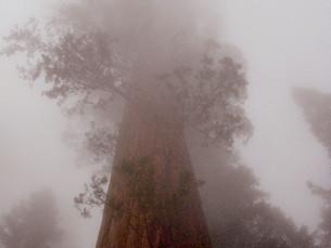 Una foto, un día: Sequoia National Park
