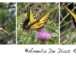 Una foto, un día: mariposas