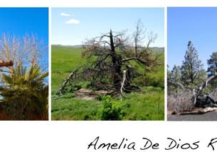 Una foto, un día: árboles