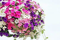 Hanging basket overflowing with colorful