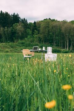 ANTLESS nature grass