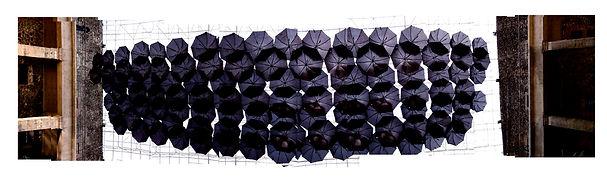 panoramica de los paraguas justo abajo.j