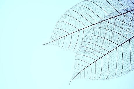 Two Dried Leaves_edited_edited.jpg