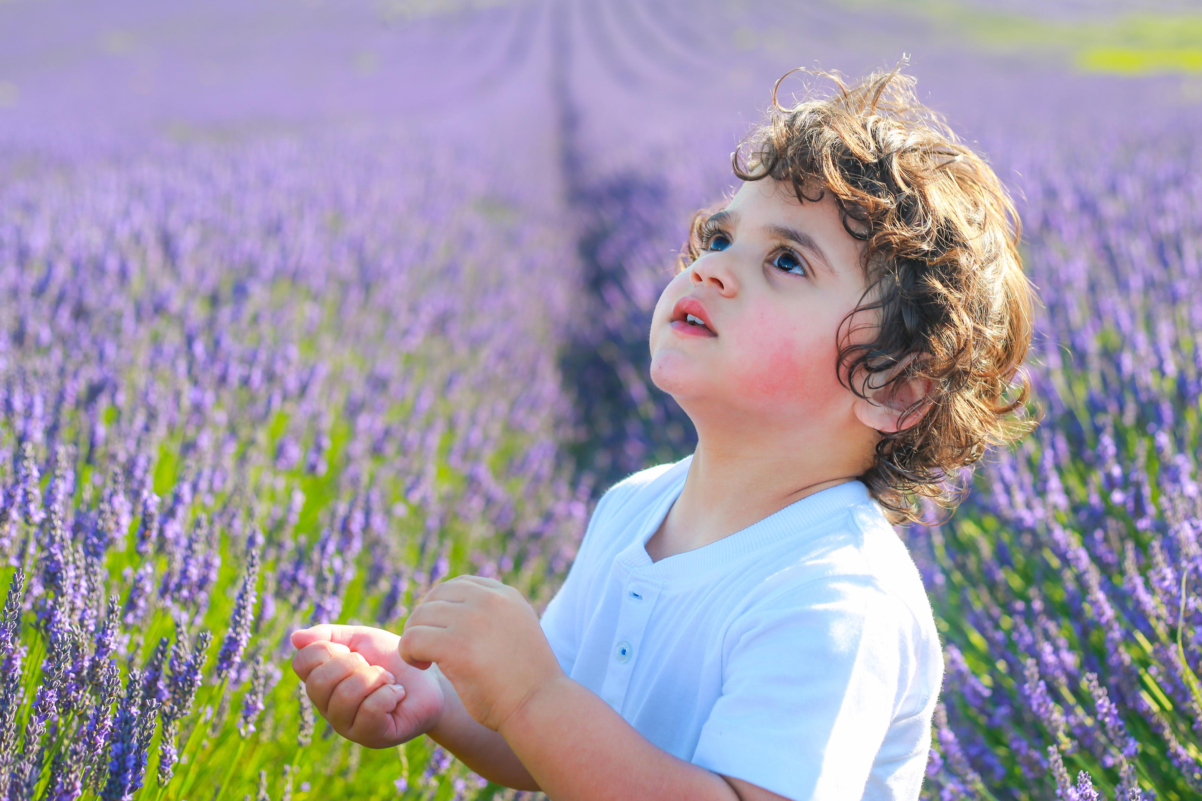 lavender a
