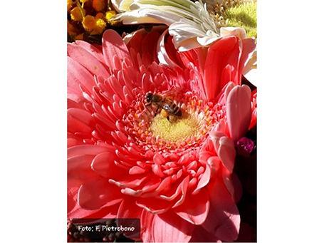 il fantastico mondo delle api A1.jpg